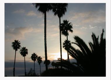 Web PhotoBorder Palm