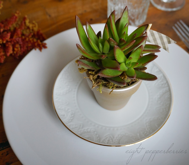 DIY Succulent Table Setting. Great for Thanksgiving or a dinner party and make a fun favor too! | www.eightpepperberries.com