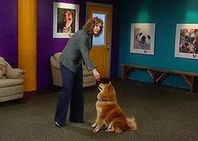 A video program about dog training