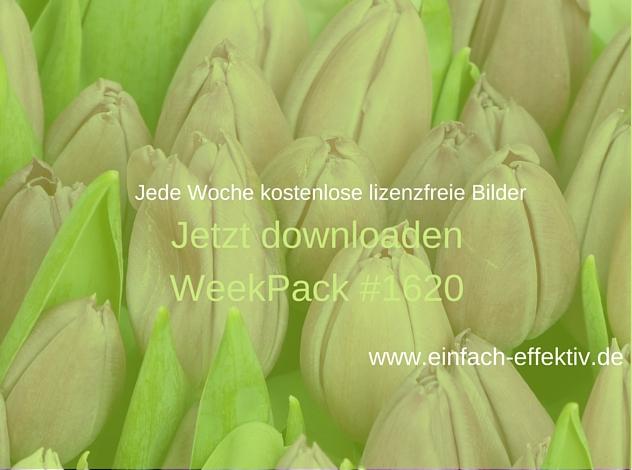 WeekPack-1620 – Kostenlose Bilder