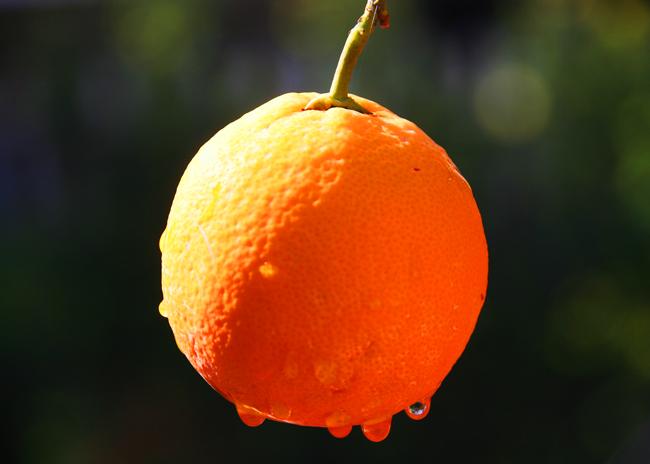 Zitate Fur Tierschutzer Vegetarier Und Veganer Foto Reife Orange Auf Dem Peloponnes