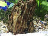 Aquarium von .Andreas.: Deep Blue Sea