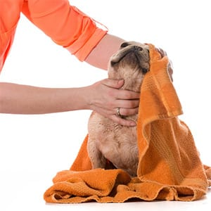 Pet Grooming Insurance | Small Business Insurance| EINSURANCE