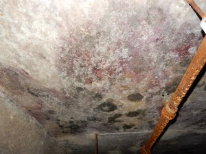 Mold Inspection and Air Testing