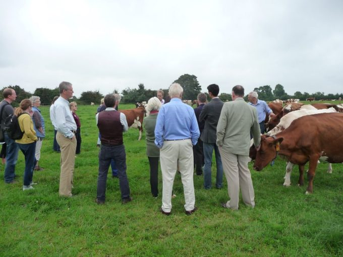 Guests with dairy herd at Broadfield Farm
