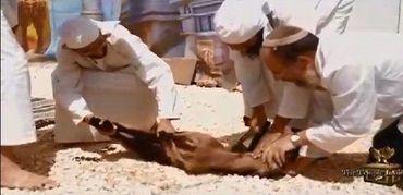Judeus são presos por tentar sacrificar animais no Monte do Templo