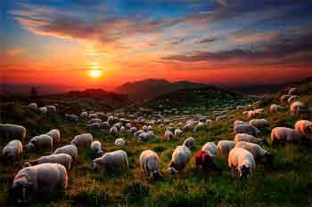Guia-me pelas veredas da justiça (Salmo 23)