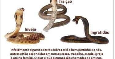 As 3 Cobras Mais Venenosas