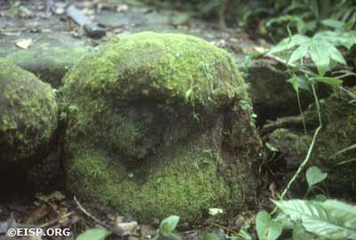 Monolith number 16 (total height 40 cm) at Ngkeklau is another example of type variety A1. It is broken, heavily covered with moss, and has been incorporated into the platform base of a stone structure. Photo by David C. Ochsner, ©1987 Jo Anne Van Tilburg.