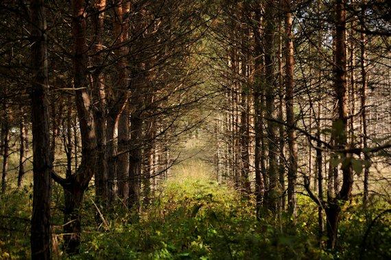 Caractersticas del Bosque