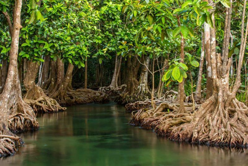 15 Ejemplos de Ecosistemas Naturales y Artificiales