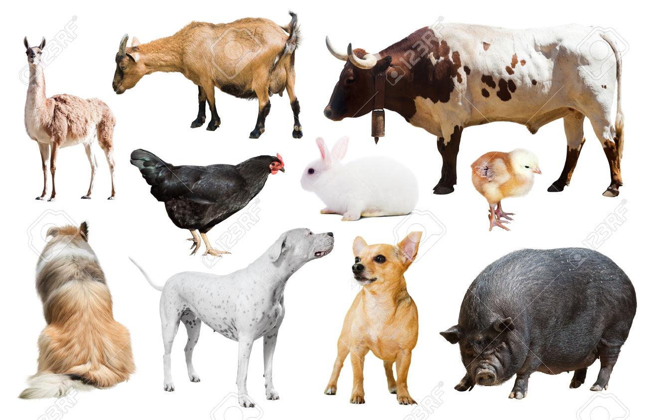 ejemplos de animales de