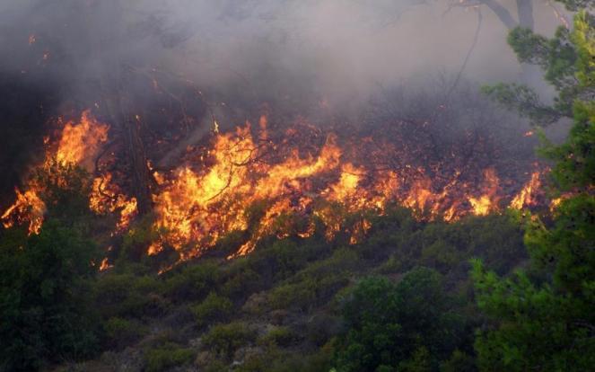 Image result for forest fires