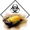 OGM légaux en France ?