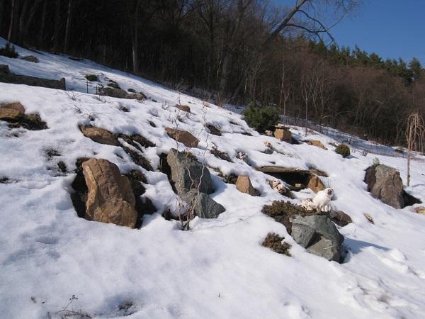 06-dekorativnyj-sklon-zimoj