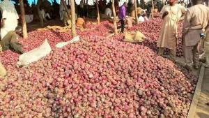 COVID-19 Third Wave: NAFDAC Gives Fresh Warning On Consumption Of Onions, Garlic