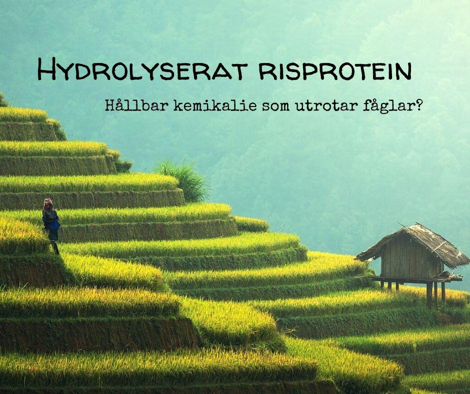 Hydrolyserat risprotein