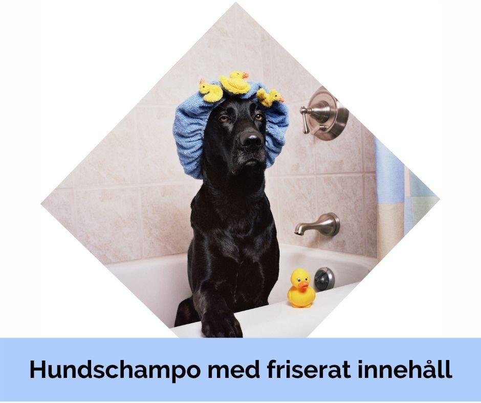 Hundschampo med friserat innehåll