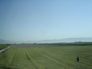agriculture iran_photo de Toby Leung