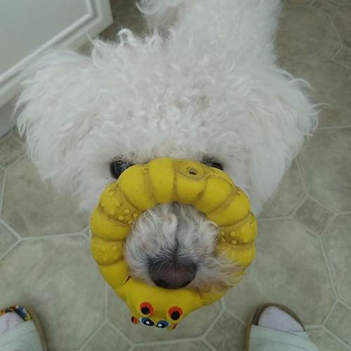 Sari Kosken Nelli-koira