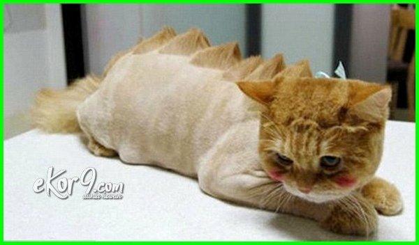 gambar kucing anggora lucu imut, gambar kucing anggora lucu banget, gambar lucu dan imut kucing anggora, gambar kucing lucu dan aneh, gambar kucing lucu gokil abis