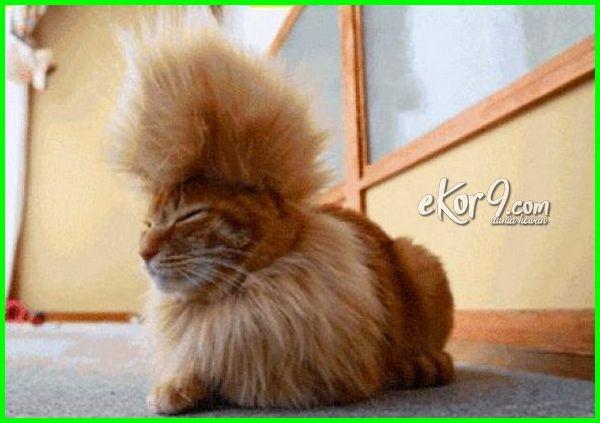 gambar kucing lucu bergaya punk, foto kucing punk