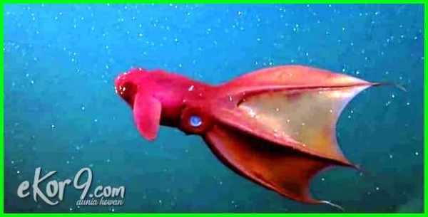hewan air laut penghisap darah, nama hewan air laut penghisap darah, hewan air laut pengisap darah, binatang air laut penghisap darah, hewan penghisap darah di air laut