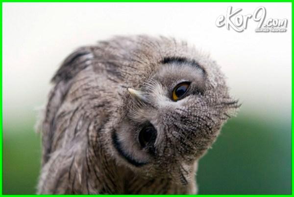 hewan melihat jin, hewan bisa melihat jin, hewan yg bisa melihat jin, hewan yang mampu melihat jin, apakah hewan dapat melihat jin, hewan yang bisa melihat jin