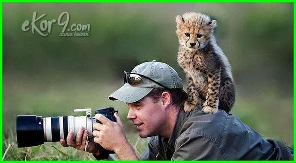 fotografi binatang, fotografi binatang kecil, hasil fotografer binatang