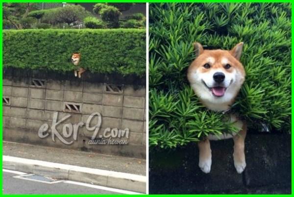 anjing terjebak di pohon, anjing terjebak dalam pohon, anjing terjebak