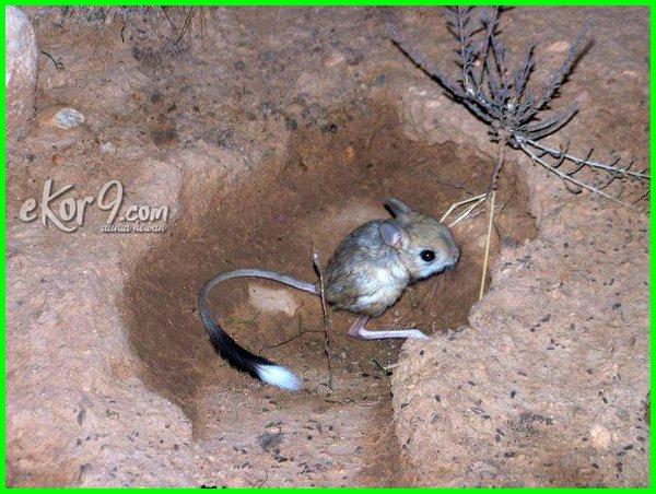 contoh hewan yang hidup di tanah,contoh hewan hidup di dalam tanah, contoh hewan yang hidup di dalam tanah, contoh hewan hidup di tanah, contoh hewan yg hidup di dalam tanah, binatang hidup di dalam tanah, hewan yang hidup di dlm tanah