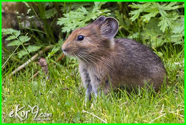 hewan yg hidup di bawah tanah, hewan apa saja yang hidup di dalam tanah, hewan apa saja yang hidup di tanah, hewan apa yang hidup di dalam tanah, binatang yang hidup dibawah tanah, hewan hidup di bawah tanah, hewan hidup bawah tanah