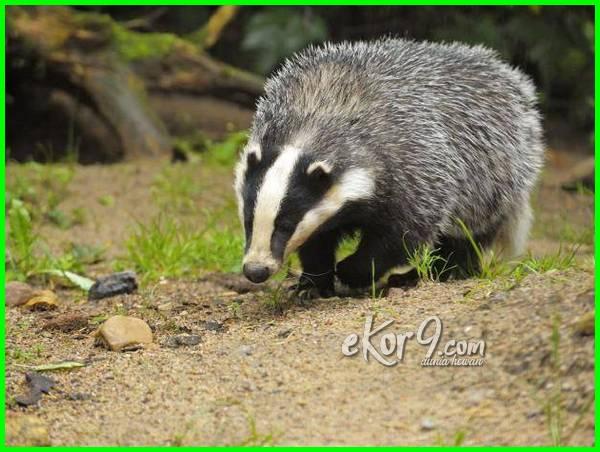 hewan yang tinggal di tanah, hewan yang tinggal di dalam tanah, hewan yg tinggal di tanah, hewan hidup bawah tanah, binatang tinggal dalam tanah, hewan hidup di tanah, hewan hidup dalam tanah, hewan hidup di dalam tanah, gambar hewan hidup di tanah