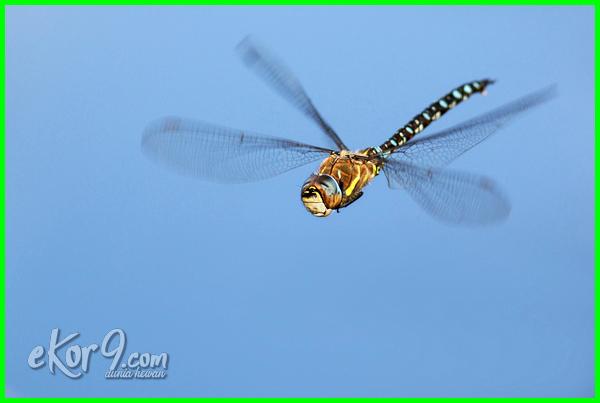 hewan hidup di udara gambar contoh nama yang dalam bahasa inggris 10 disebut hidupnya ciri-ciri macam apa saja air dan darat yg ciri khusus mamalia perbedaan sistem gerak binatang jenis kelompok pada sebutkan 5