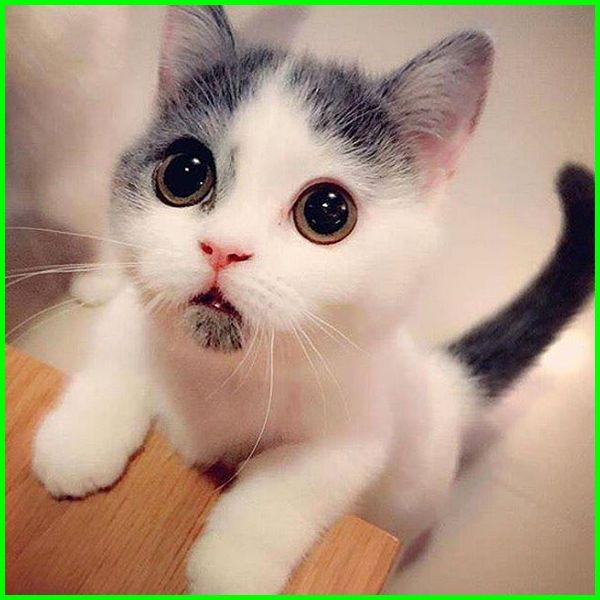 gambar kucing ekspresi lucu, foto kucing lucu editan, foto kucing ekspresi lucu, gambar ekspresi kucing lucu, gambar kucing dengan ekspresi lucu, gambar expresi kucing lucu, gambar ekspresi kucing yang lucu