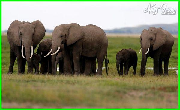 hewan infrasonik, hewan infrasonik audiosonik dan ultrasonik, hewan gelombang infrasonik, contoh hewan infrasonik audiosonik dan ultrasonik, hewan yang infrasonik, contoh hewan infrasonik audiosonik ultrasonik, contoh hewan infrasonik adalah, hewan infrasonik adalah
