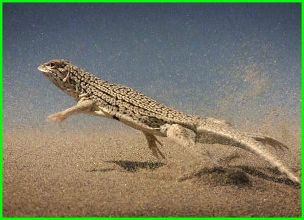 hewan yang ada di gurun pasir, hewan yg hidup di gurun pasir, hewan yg ada di gurun pasir, hewan yang hidup di pasir pantai, hewan yang hidup di pasir, hewan yg hidup di pasir, hewan kecil hidup di pasir, hewan pasir bertelur