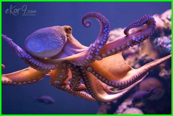 contoh hewan yang infrasonik dan ultrasonik, hewan yang memiliki frekuensi infrasonik, hewan yang menggunakan gelombang infrasonik, hewan yang menangkap gelombang infrasonik, hewan hewan infrasonik, jenis hewan infrasonik, hewan yang memiliki kemampuan infrasonik