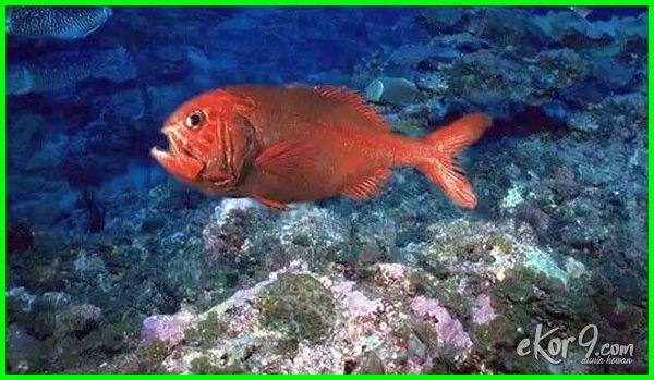 hewan yang memiliki umur panjang, hewan yang paling panjang umur, hewan yang panjang umur, hewan yg memiliki umur panjang, hewan yg panjang umur