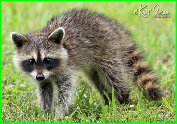 hewan insektivora apa saja, gambar hewan insektivora dan makanannya, ciri hewan insektivora, ciri2 hewan insektivora