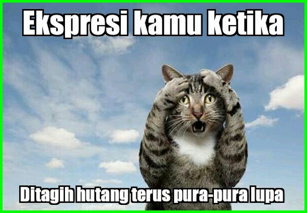 ekspresi kucing lucu berhutang