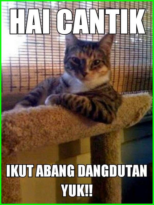 kucing ngajak kencan, kucing ngedate