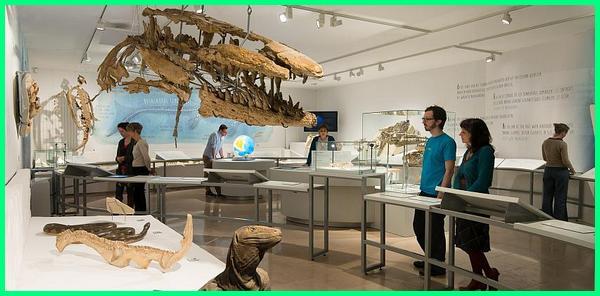 museum yang ada dinosaurus, museum dinosaurus yang mungkin ada di indonesia