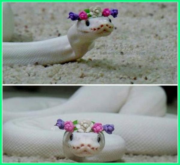 ular paling cantik di dunia, ular cantik, ular cantik manis, ular cantik tidak berbisa, ular cantik berbisa, ular cantik di indonesia, ular cantik yang mematikan, ular cantik didunia, ular cantik tapi mematikan, ular cantik asli indonesia