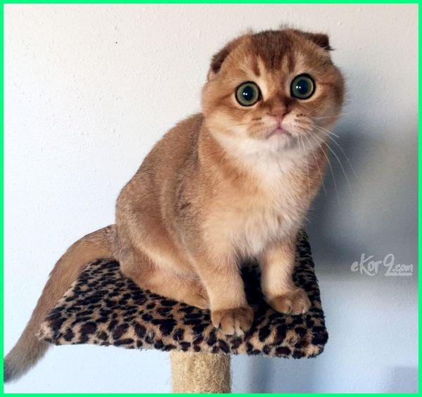 anak kucing tercantik, anak kucing paling cantik