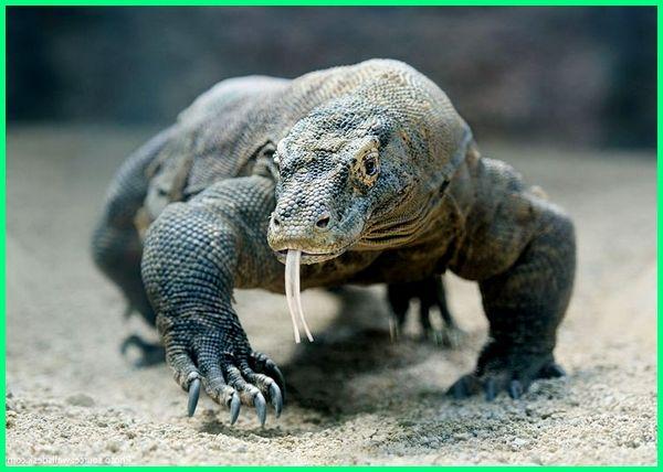 103+ Gambar Fauna Endemik Sumatera Gratis