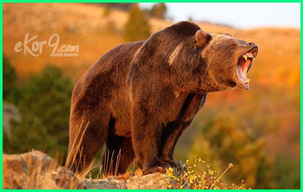 hewan kuat di dunia, hewan paling kuat di dunia, hewan yang paling kuat di dunia, hewan yg paling kuat di dunia di darat