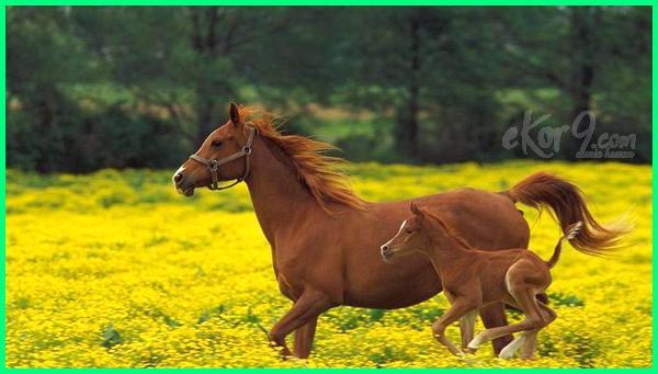 hewan lari tercepat di dunia, hewan yg tercepat di dunia, 10 hewan tercepat di darat, 5 hewan tercepat di darat, 7 hewan tercepat di darat, 7 hewan pelari tercepat, 7 hewan darat tercepat di dunia, hewan udara tercepat, urutan hewan tercepat di darat