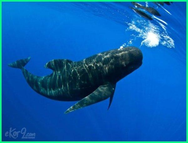 hewan tercepat di air