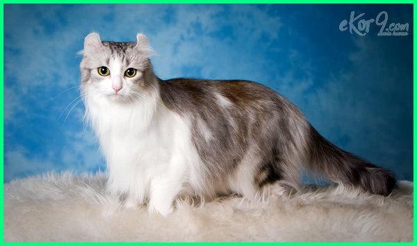 kucing tercantik di dunia princess aurora 2016 ini anggora foto foto2 jenis dan terlucu mata nama poto ras terimut video yang yg gambar 10 7 paling cantik parsi